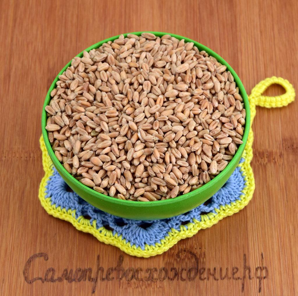 В чем хранить пшеницу в домашних условиях 260