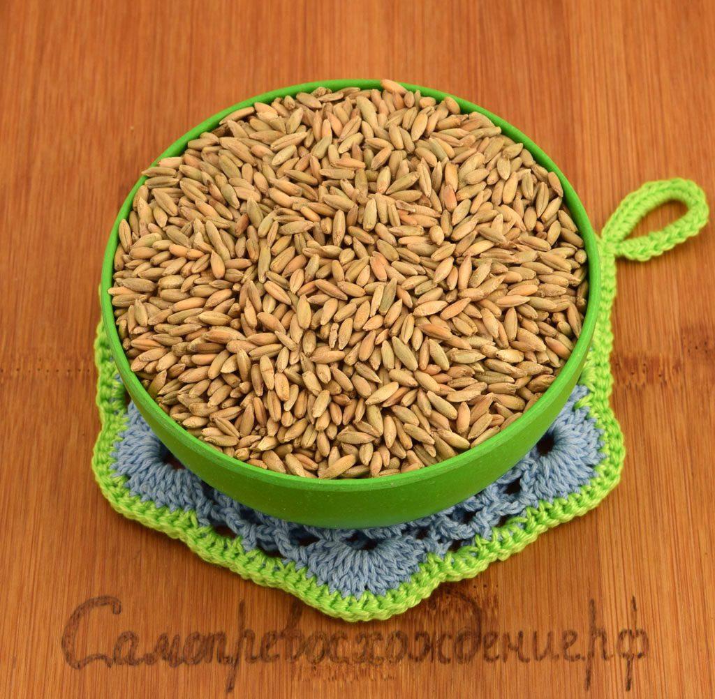 Когда употреблять пророщенную пшеницу в домашних условиях